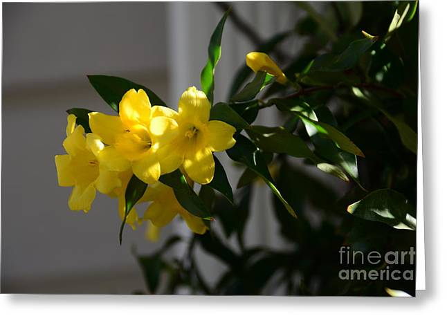 Sc Yellow Jessamine State Flower -georgia Greeting Card by Adrian DeLeon
