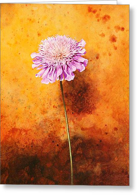 Scabious Greeting Card
