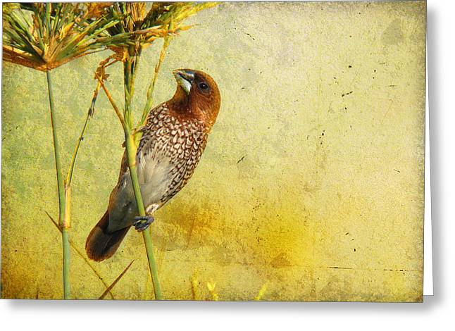 Scaly-breasted Munia Greeting Card by Perry Van Munster