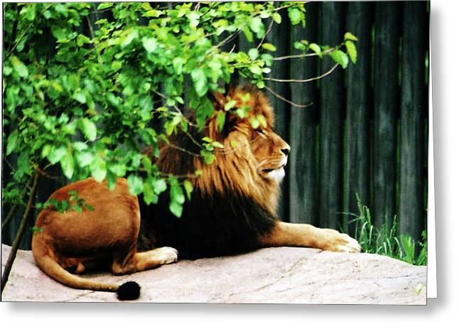 Scar Greeting Card