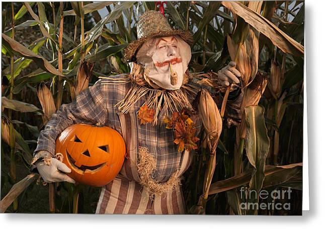Scarecrow With A Carved Pumpkin  In A Corn Field Greeting Card