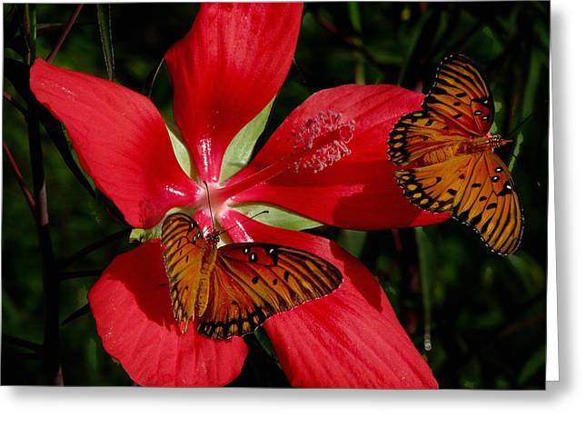 Scarlet Beauty Greeting Card by Peg Urban