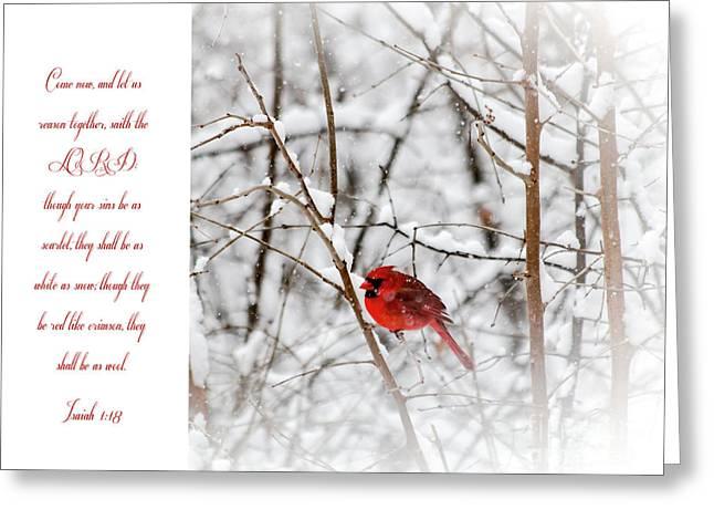 Scarlet Greeting Card by Debbie Nobile