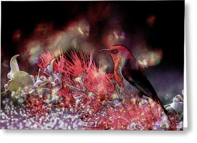 Scarlet Honeyeater Greeting Card by Ericamaxine Price
