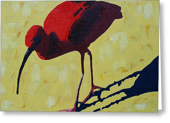 Scarlet Ibis Greeting Card by Donald Amorosa