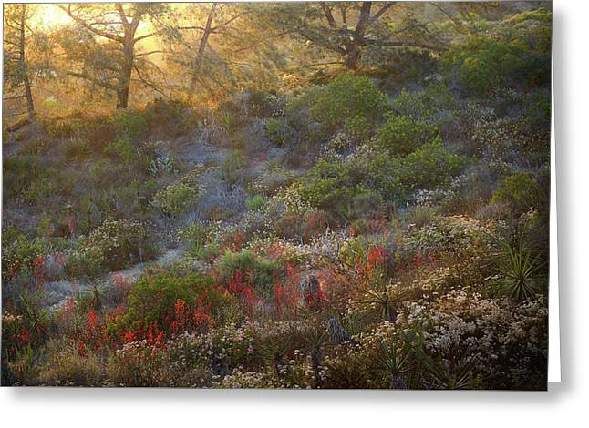 Greeting Card featuring the photograph Scarlet Larkspur At Sunset by Alexander Kunz