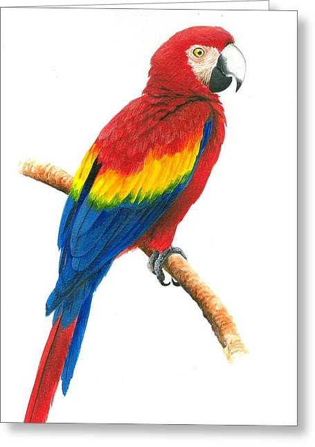Scarlet Macaw Greeting Card by Christopher Cox