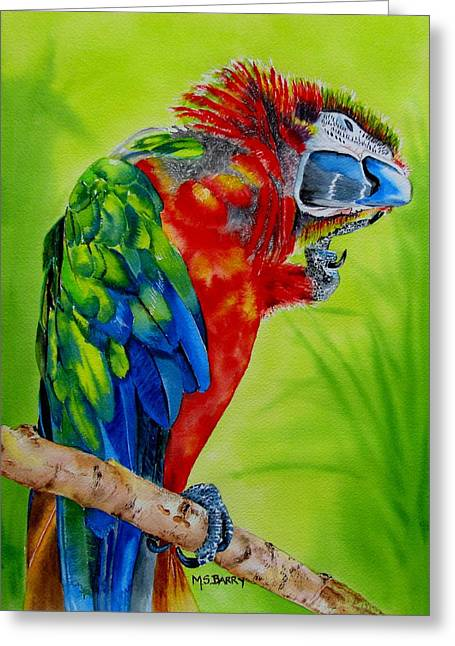 Scarlet Macaw Greeting Card by Maria Barry