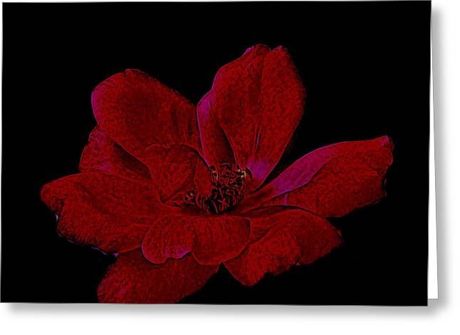 Scarlet Rose Greeting Card by Marsha Heiken
