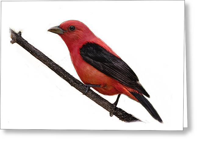 Scarlet Tanager On Branch Greeting Card