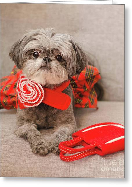 Scarlett And Red Purse Greeting Card