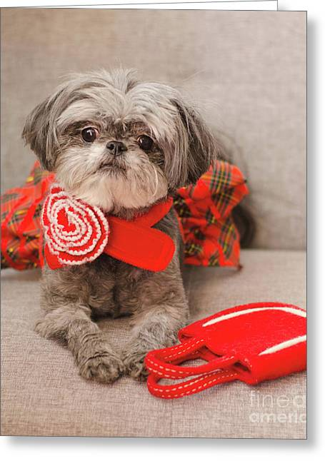 Greeting Card featuring the photograph Scarlett And Red Purse by Irina ArchAngelSkaya