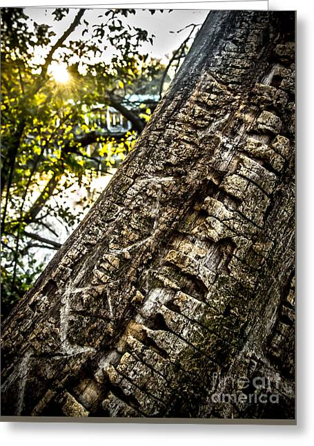 Scarred Tree And Boathouse Greeting Card by James Aiken