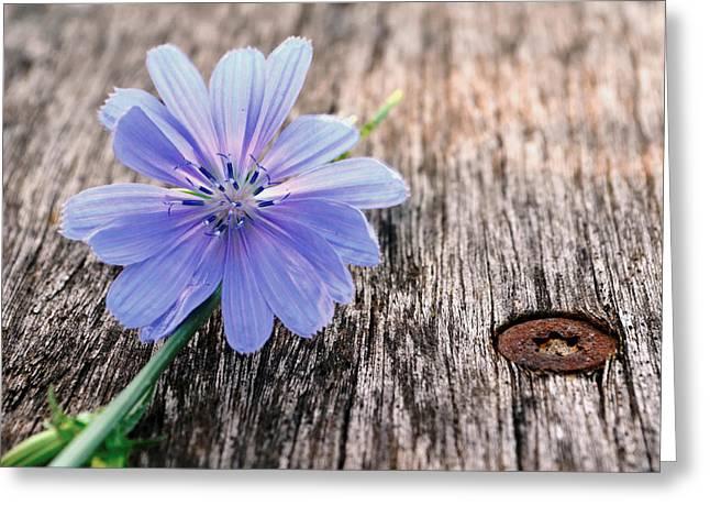 Scent ...florist Greeting Card