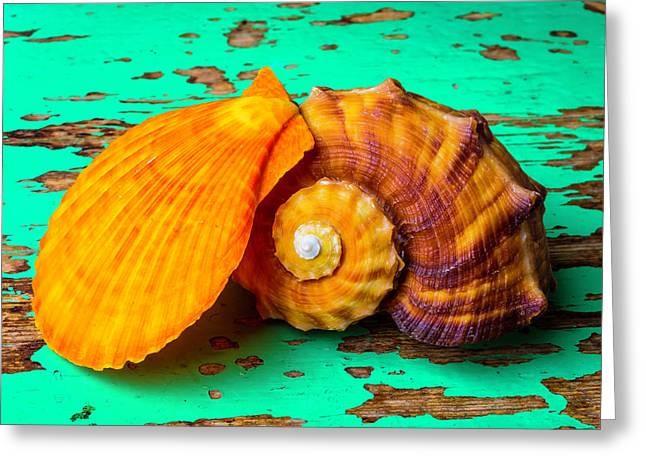 Schallop Seashell And Snail Shell Greeting Card by Garry Gay