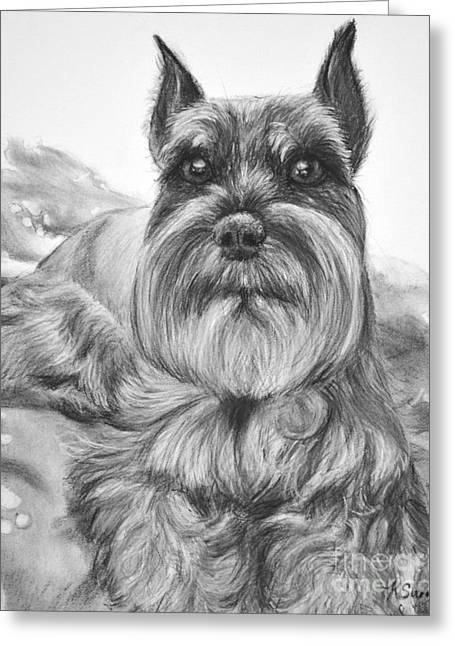 Schnauzer Drawing Bailey Greeting Card by Kate Sumners