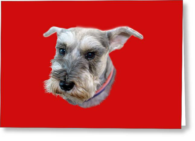 Schnauzer - Transparent Greeting Card
