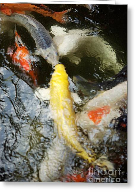 Japanese School Greeting Cards - School of Koi Greeting Card by Larry Dale Gordon - Printscapes