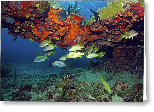 Schooling Fish At Calf Rock Greeting Card