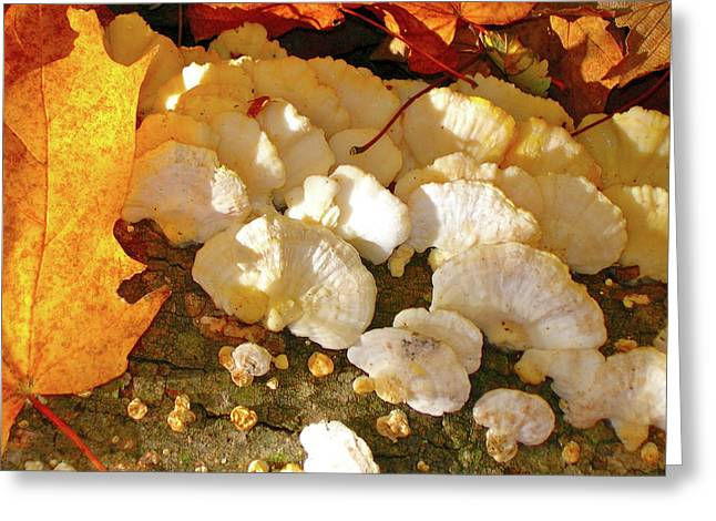 Schrooms And Shadows Greeting Card by Randy Rosenberger
