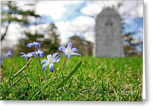 Greeting Card featuring the photograph Scilla In Cemetery by Charline Xia