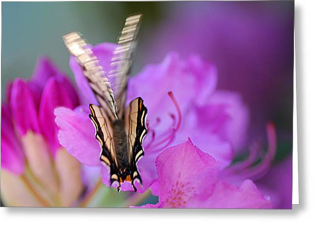 Greeting Card featuring the photograph Scissorwings by Susan Capuano