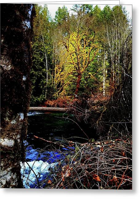Scoggins Creek 3 Greeting Card