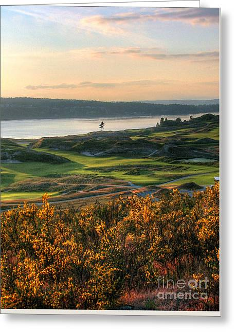Scotch Broom -chambers Bay Golf Course Greeting Card