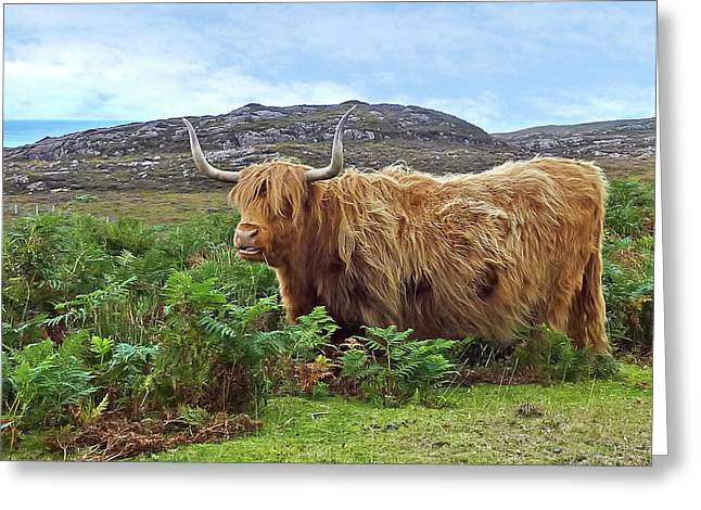 Scottish Highland Cow Greeting Card