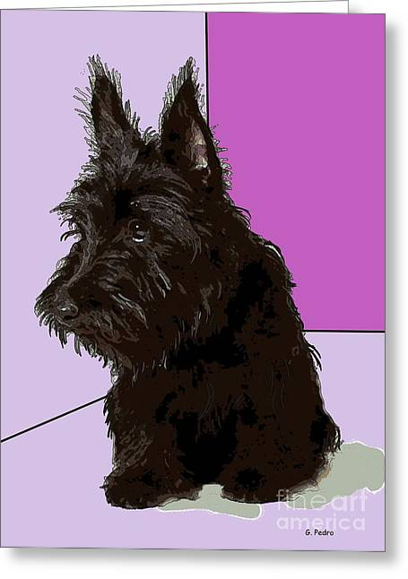 Scottish Terrier Greeting Card by George Pedro