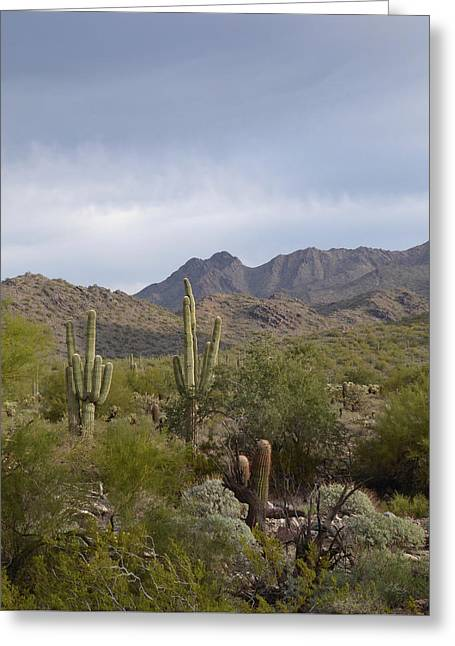 Scottsdale Skyline Greeting Card