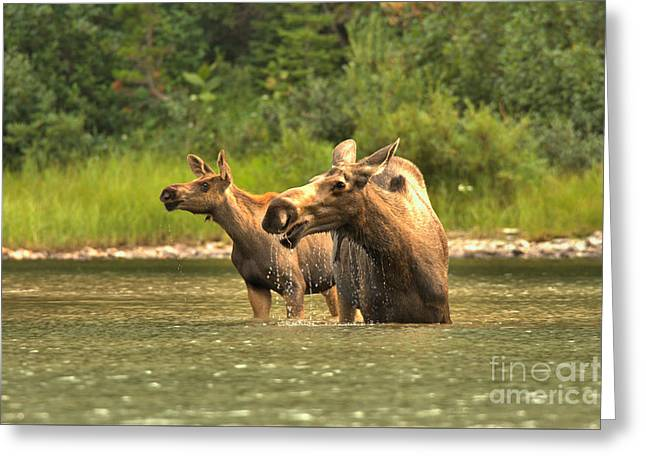Scouring The Rocky Mountain Lakeshore Greeting Card