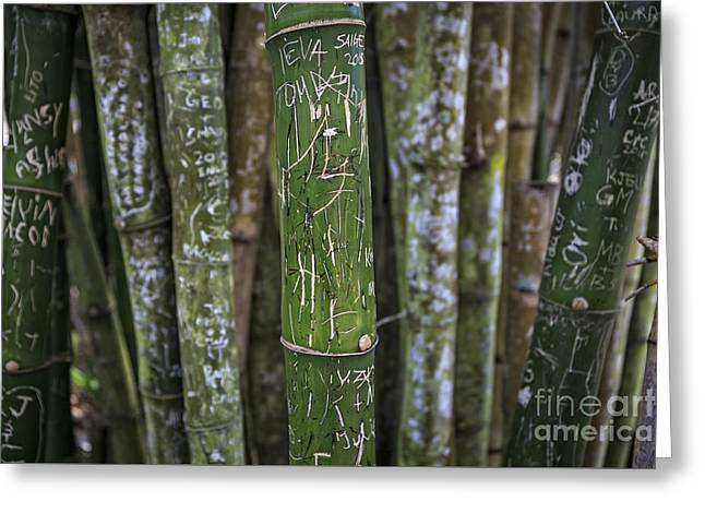 Scratched Bamboo Greeting Card by Edward Fielding