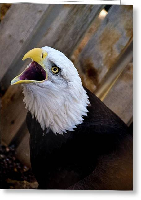 Screaming Eagle Greeting Card
