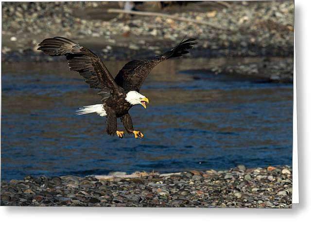 Screaming Eagle II Greeting Card