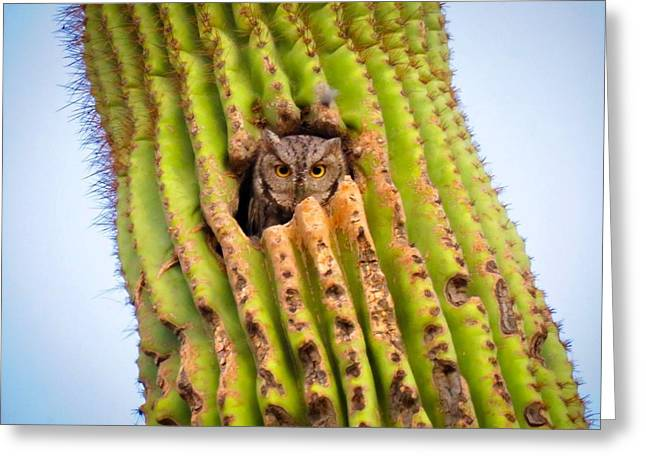 Screech Owl In Saguaro Greeting Card