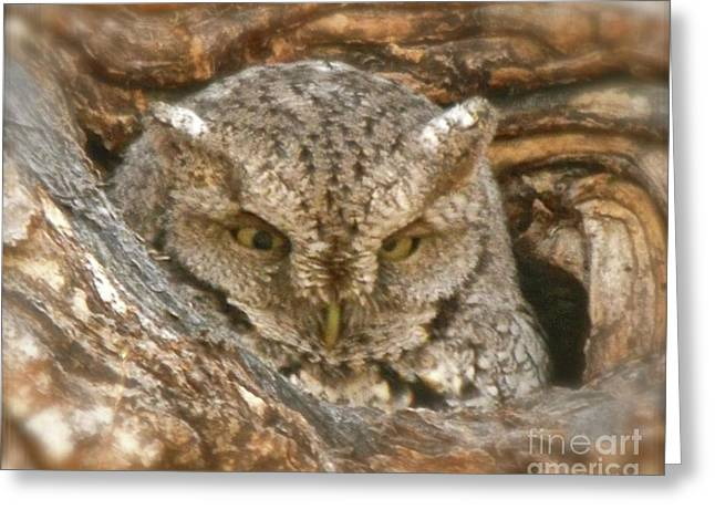Screech Owl On Spring Creek Greeting Card