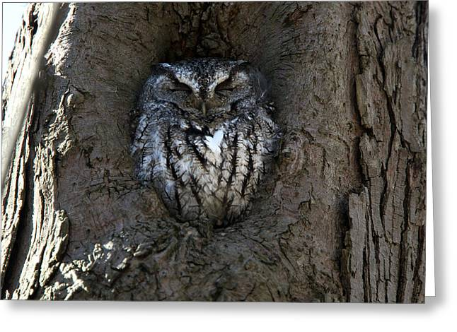 Screech's Rest Greeting Card by David Yunker