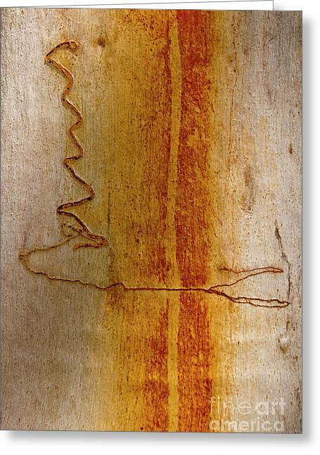 Greeting Card featuring the photograph Scribbly Gum Bark by Werner Padarin