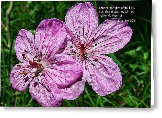 Scripture And Picture Matthew 6 28 Greeting Card by Ken Smith
