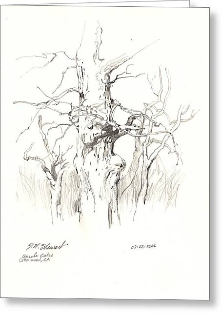 Greeting Card featuring the drawing Scrub Oaks In Cottonwood by John Norman Stewart