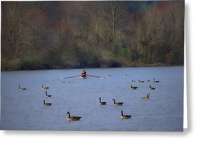 Scullers Among The Geese II Greeting Card