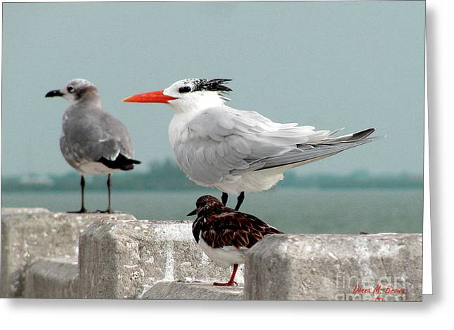 Greeting Card featuring the photograph Sea Birds by Donna Brown