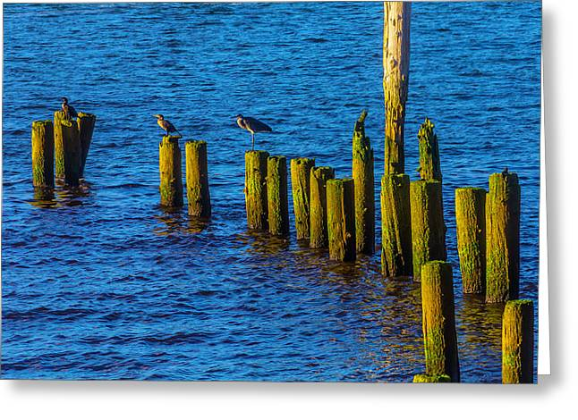 Sea Birds On Old Pier Posts Greeting Card by Garry Gay