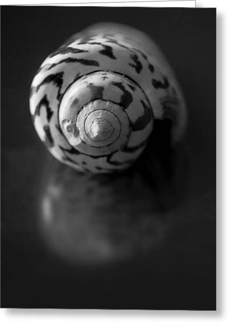 Sea Gem In Black And White Greeting Card by Maggie Terlecki