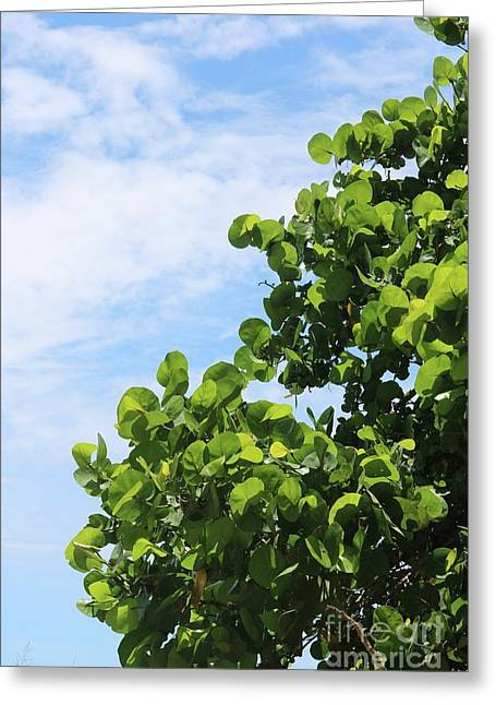 Sea Grapes With Blue Sky Greeting Card