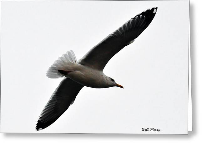 Sea Gull Hovering Greeting Card by Bill Perry