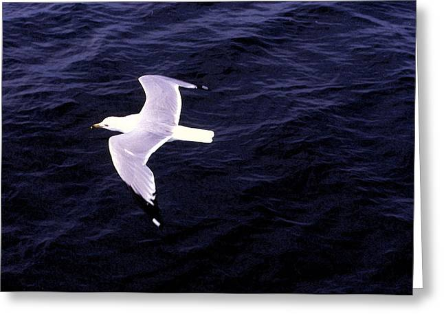 Greeting Card featuring the photograph Sea Gull Over Water Dbwc by Lyle Crump
