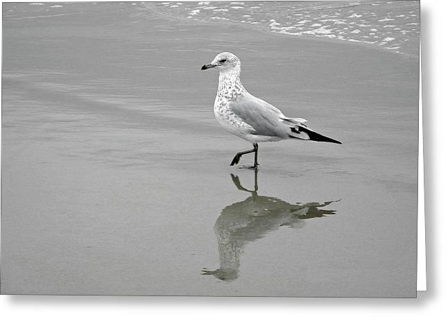 Sea Gull Walking In Surf Greeting Card