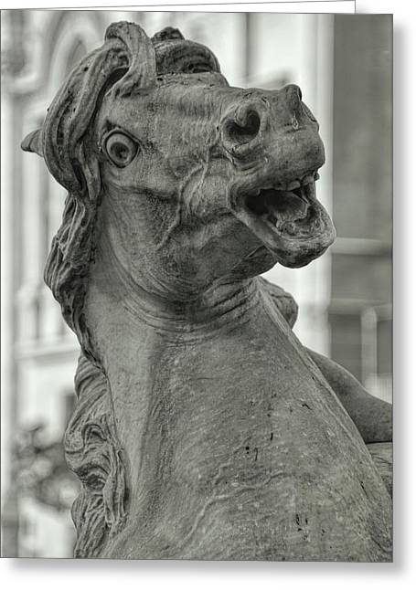 Sea-horse On The Piazza Greeting Card by JAMART Photography